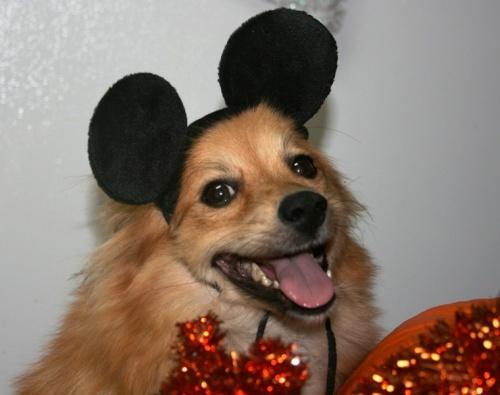 Halloween Dog Mouse 100313
