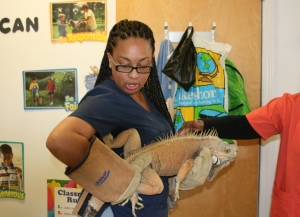 Danya showing AHS' iguana, George, to schoolchildren.